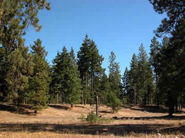 East Cascades Ecoregion scene